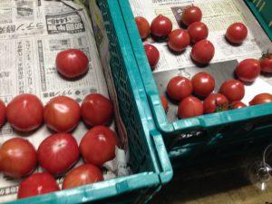 Aiの日記(^^) 『お宝トマト』 - [1/2]
